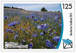 Gefährdete Pflanzenarten in Mecklenburg-Vorpommern